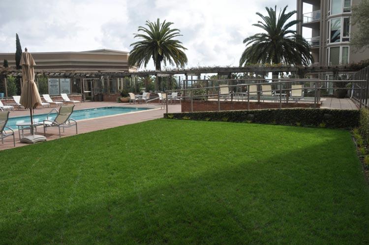 Poolside Lawn